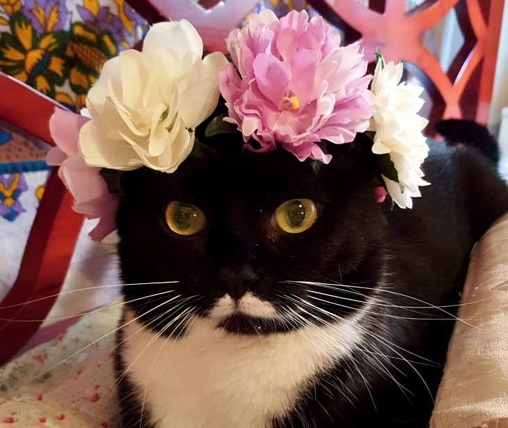 isotta cat influencer