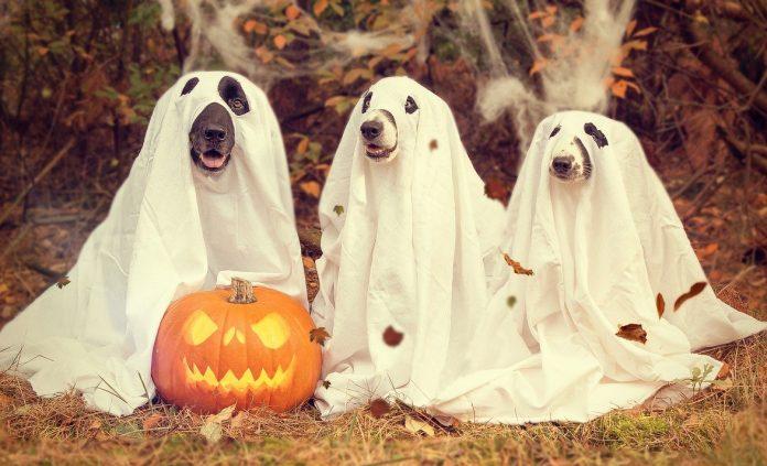 campagna instagram halloween
